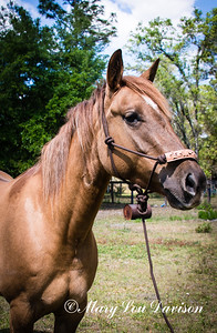 horsesofwedgfield-0751