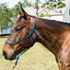 horsesofwedgfield-1301