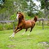 horsesofwedgefield-2135