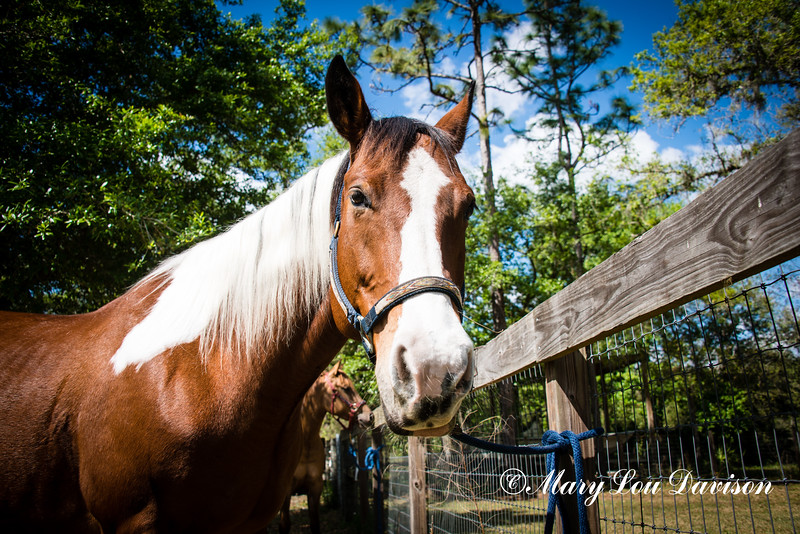horsesofwedgfield-0678