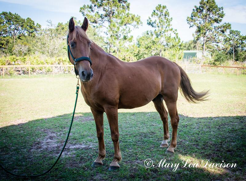 horsesofwedgfield-2175