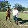 horsesofwedgfield-2188