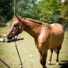horsesofwedgfield-0748
