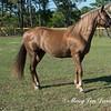 horsesofwedgfield-2213