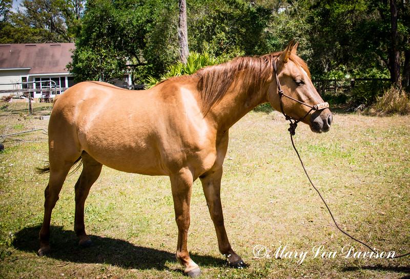 horsesofwedgfield-0772