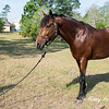 horsesofwedgfield-1063