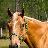 horsesofwedgfield-1226
