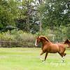 horsesofwedgefield-2073