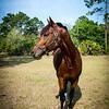 horsesofwedgfield-1117