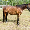horsesofwedgfield-1266