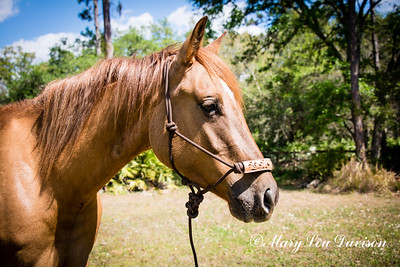 horsesofwedgfield-0776