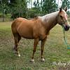 horsesofwedgfield-1194