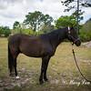 horsesofwedgfield-0986