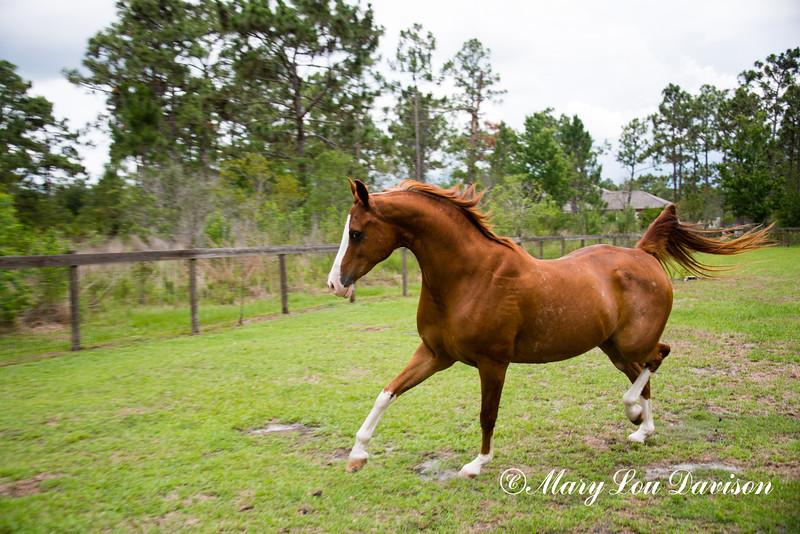 horsesofwedgefield-2082