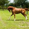 horsesofwedgefield-2070