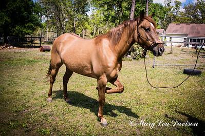 horsesofwedgfield-0763