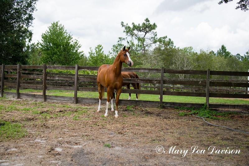 horsesofwedgefield-2160