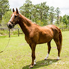 horsesofwedgefield-1861