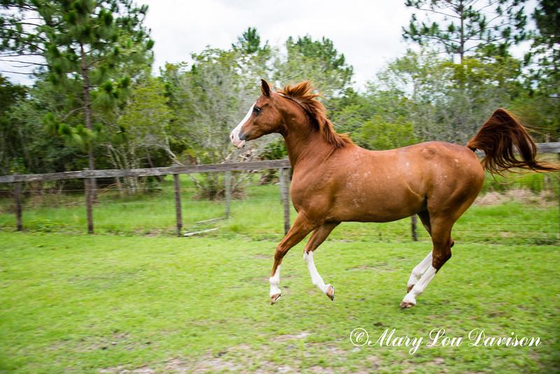 horsesofwedgefield-2138