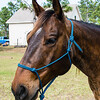 horsesofwedgfield-1305
