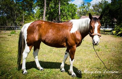 horsesofwedgfield-0693
