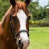 horsesofwedgefield-2047