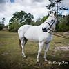 horsesofwedgfield-0928