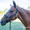 horsesofwedgfield-2225
