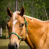 horsesofwedgfield-1225