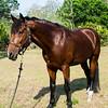 horsesofwedgfield-1071