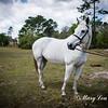 horsesofwedgfield-0929