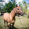 horsesofwedgfield-0752