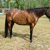horsesofwedgfield-1259