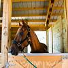 horsesofwedgfield-2174