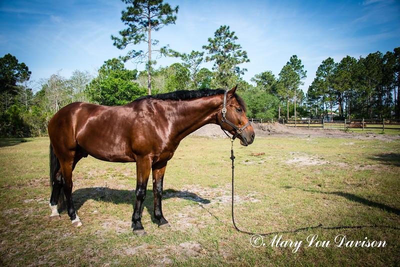 horsesofwedgfield-1037