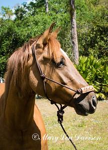 horsesofwedgfield-0823