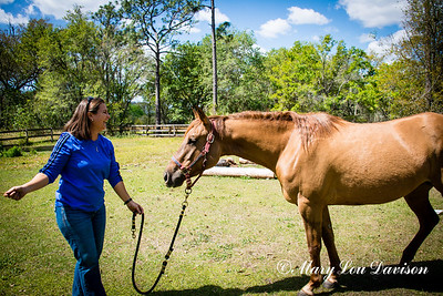 horsesofwedgfield-0749