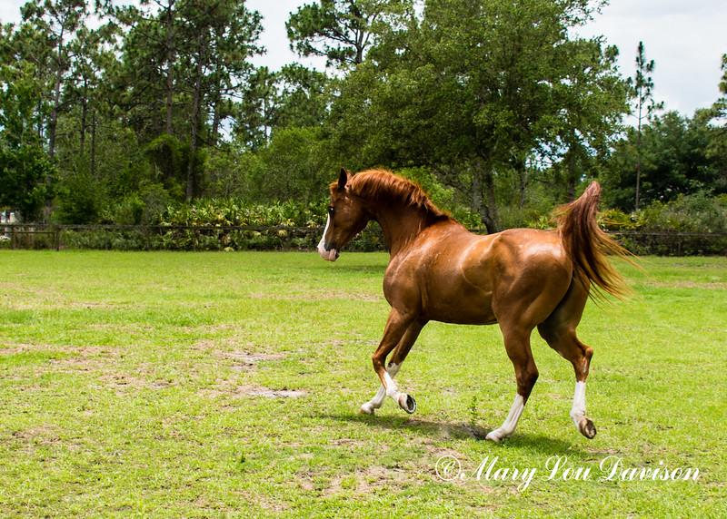 horsesofwedgefield-2072