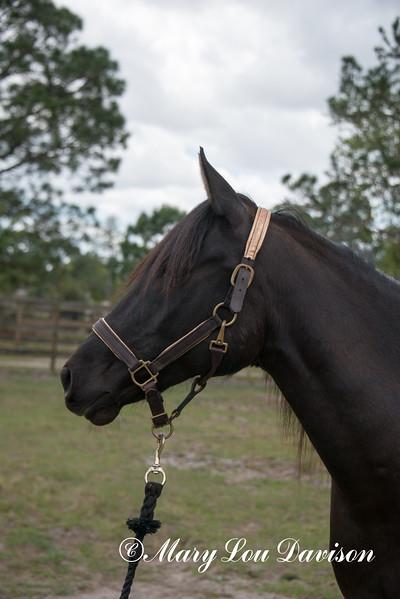 horsesofwedgfield-0993