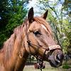 horsesofwedgfield-0753