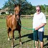 horsesofwedgfield-2184