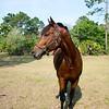 horsesofwedgfield-1116