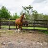 horsesofwedgefield-2159