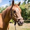 horsesofwedgfield-0775