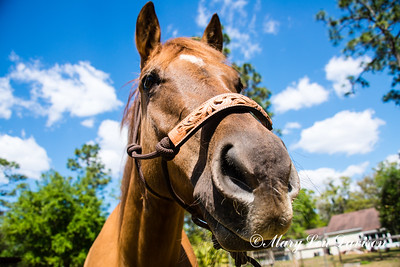 horsesofwedgfield-0777