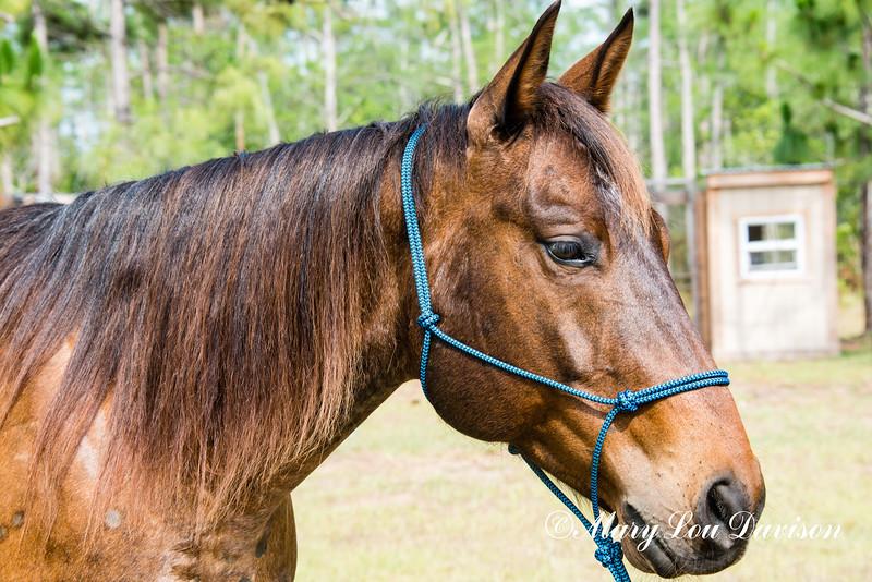horsesofwedgfield-1273