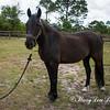 horsesofwedgfield-0999