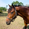 horsesofwedgfield-1091