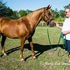 horsesofwedgfield-2205