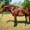 horsesofwedgfield-1033